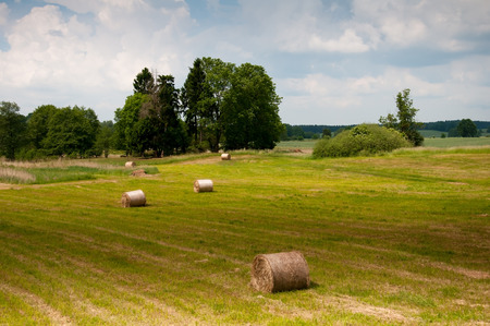 haycock: Early summer meadow with golden bales and trees in the distance Stock Photo