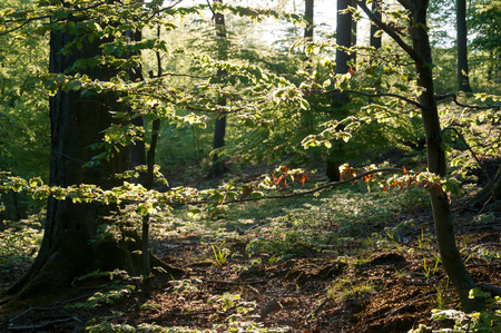 deciduous forest: Beautiful green deciduous forest Stock Photo