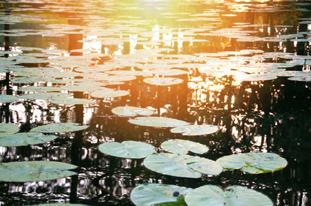 sky reflection: View on the river with many water lilies
