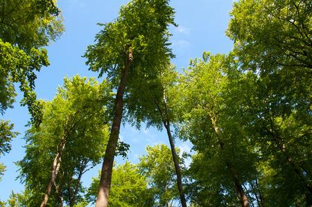 deciduous: Beautiful green deciduous forest Stock Photo