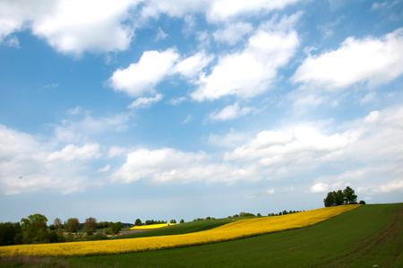 blue cloudy sky: Field under blue cloudy sky Stock Photo