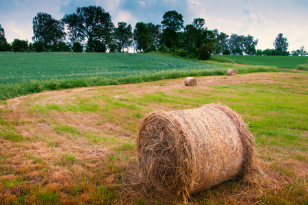 haycock: Summer meadow with golden bales Stock Photo
