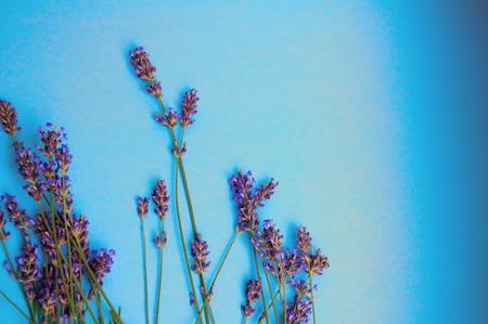 heather: Heather flowers frame on blue background Stock Photo