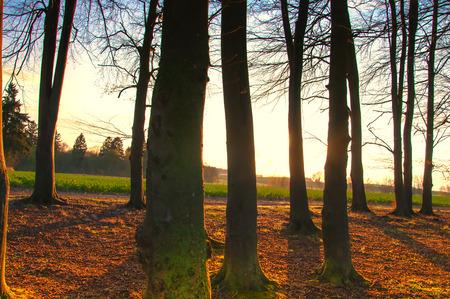 deciduous forest: Beautiful deciduous forest Stock Photo
