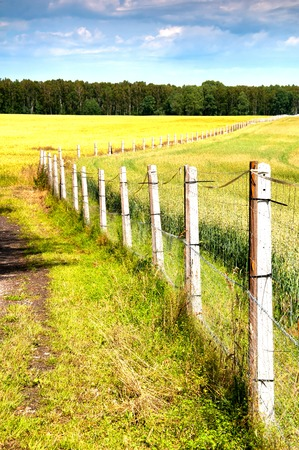 fenced in: Fenced country road in the sun