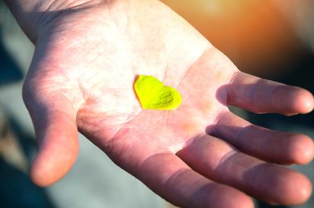 saint paddy's: Hand holding clover leaf