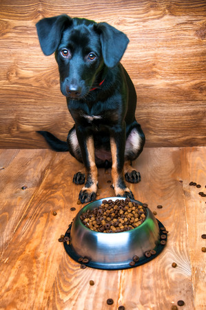 Dog is going to eat food from a bowl Stock Photo