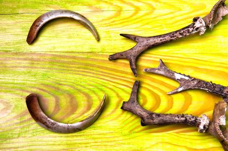 tusks: Deer antlers and wild boar tusks