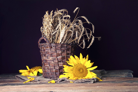 Cereal ears in wicket basket and sunflower Stock Photo