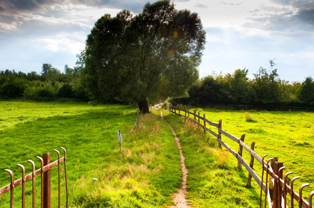 fenced in: Fenced meadow in summer Stock Photo