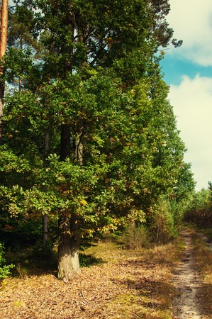 deciduous forest: Deciduous forest in early autumn