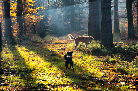 Two dogs on walk in forest Stock Photo