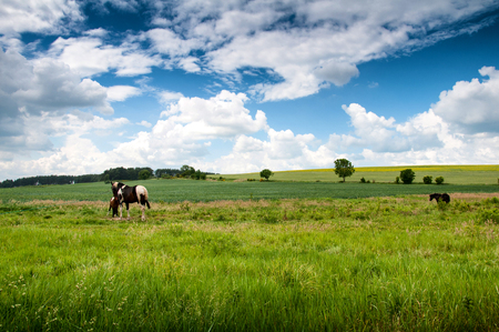 mare: Mare and foal on meadow in summertime Stock Photo