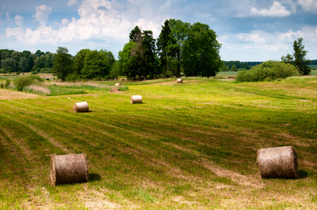 bales: Golden bales on meadow