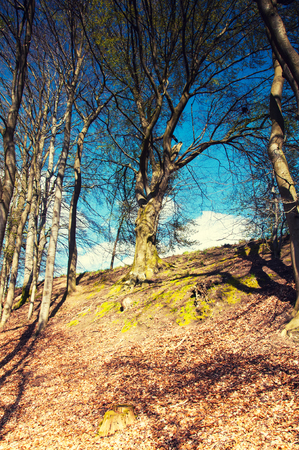 Trees on the hill in early autumn Standard-Bild