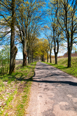 Country road between trees