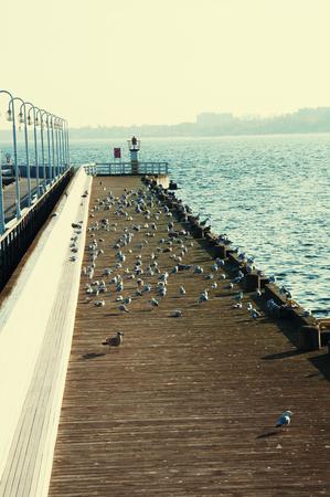 Many seagulls on pier