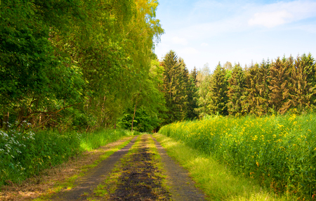 Sandy country road through the forest