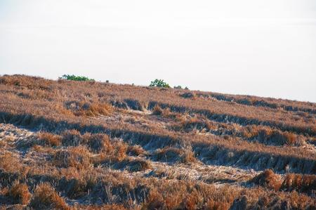 Destroyed wheat field Standard-Bild