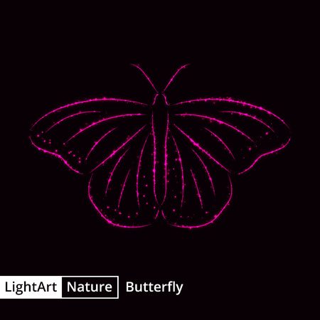 butterfly background: Butterfly silhouette of pink lights on black background Illustration