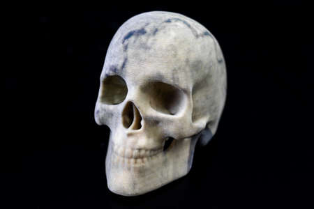 3D printed skull with gypsum as material and as front view picture
