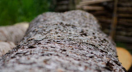 Texture of a tree trunk in close-up. With obvious blurring. Stok Fotoğraf