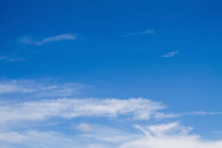 Blue sky, light cloud cover with many storks in the sky.