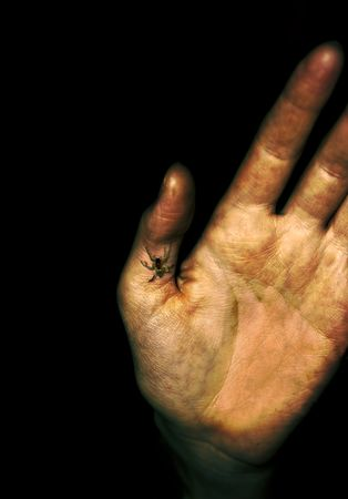 creeping: zombie hirrible hand of horror with spider creeping