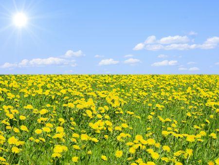 heavenly meadow photo