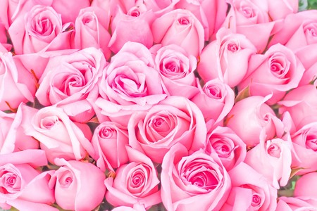 big bunch of multiple pink roses of a bride on a wedding from top, of bridal photos series  photo
