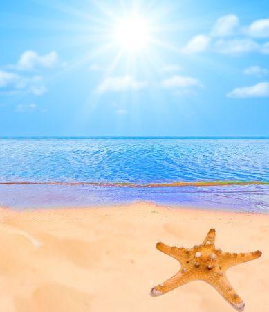 Sea star on a beach sand photo