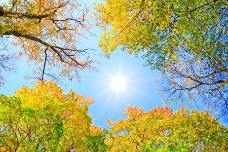 Sun in the sky between trees photo