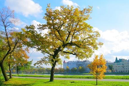 Park trees photo