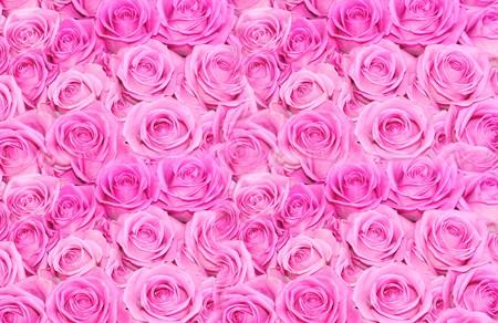 rosas naranjas: Rosas rojas