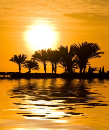 a mirage: Jungle Sunset Mirage