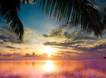 Sunset between Palms Stock Photo - 7951629