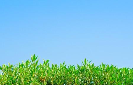 plants Stock Photo - 7951490