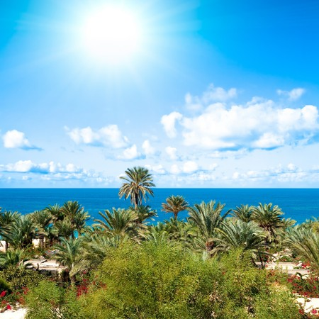 sun, palms, resort photo