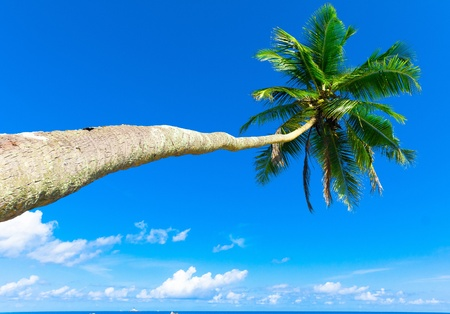 Palms Overhanging Trees  Stock Photo - 9829210