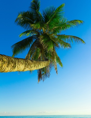 Palm Scene Overhanging  photo