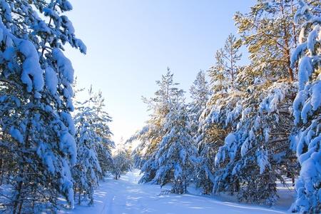 Pure Winter Happiness Stock Photo - 9828475
