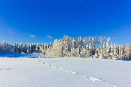 Hot Winter snow  Stock Photo - 9828828
