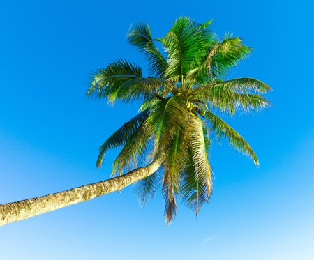 Tree Palm Trunk Stock Photo - 9829165