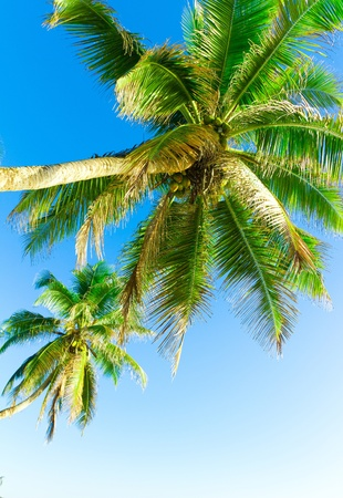 Palms Getaway Paradise Stock Photo - 9826239