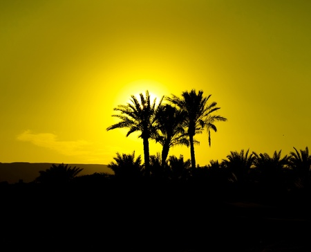 Palmtrees And Sunset Sky Background Stock Photo - 9826095