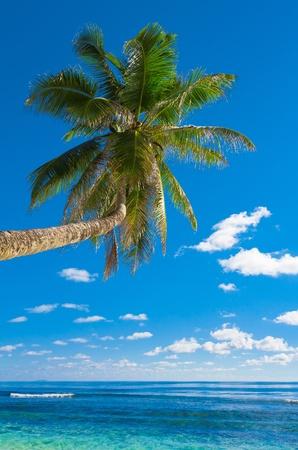 splutter: Tree Palm Getaway