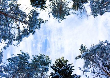 Winter trees Stock Photo - 10605999