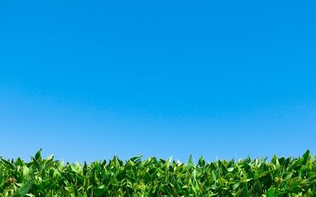 Reaching For Blue Sky  photo