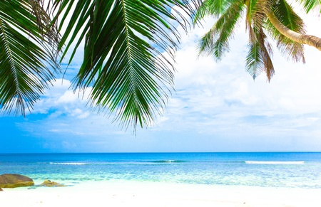 Jungle Sea Palm Stock Photo - 10606228