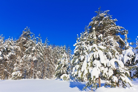 Winter trees in the mountains  Stock Photo - 10667407